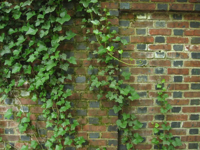 Viney_Brick_Wall_by_mynti_stock