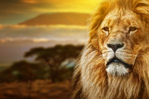 How One Lion Showed Us Everything That Is Wrong With Humanity